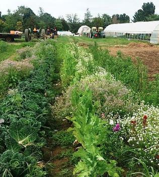 Farm to Fork Gala Benefits Montauk Community Garden